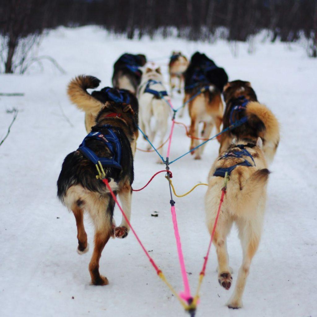 Hundskola