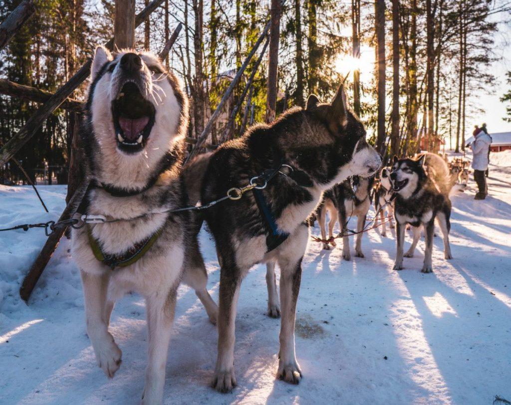 teamwork hundskola